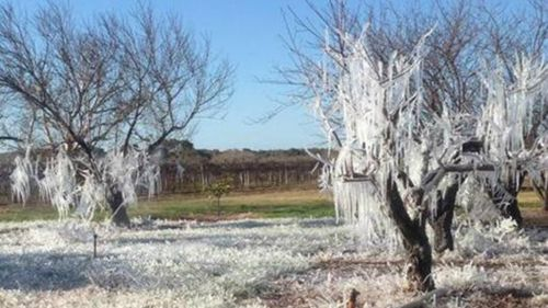 Low temperatures turn The Riverland into a winter wonderland. (supplied)